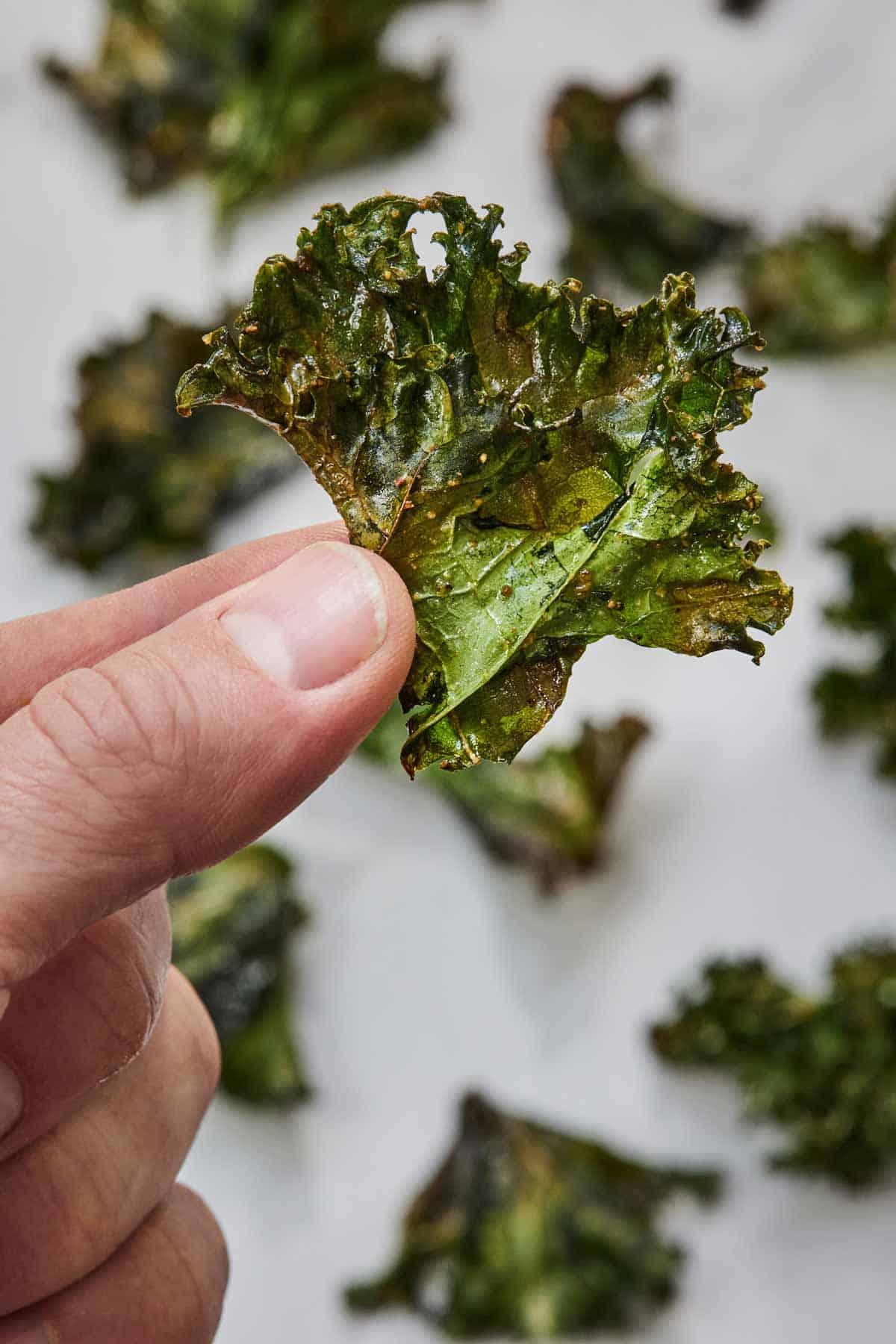 Hand holding a crispy baked kale chip.